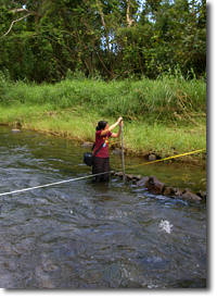 Staff measuring streamflow in Punaluu Stream, Oahu.