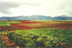 Diversified agriculture on Oahu.