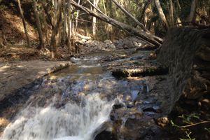 Diversion on Olowalu Stream