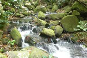 Kānewai Stream at below Ka'ala Farm intake