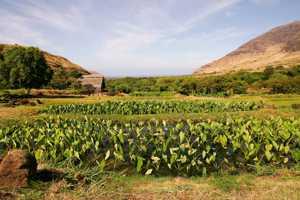 View of Ka'ala Farm
