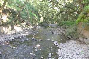 Hoolawa Stream at Haiku Ditch