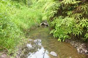 West Kolea Stream above Wailoa Ditch
