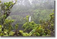 Waikamoi, Maui