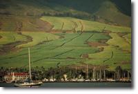 Sugar Cane Fields, Lahaina, Maui.